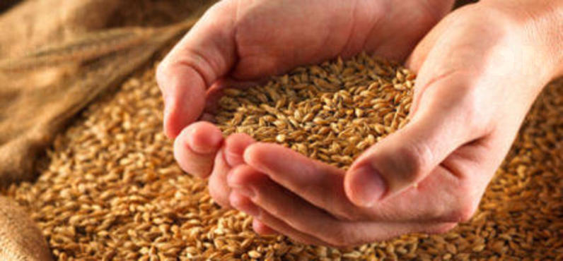 Diet: How healthy is wheat?